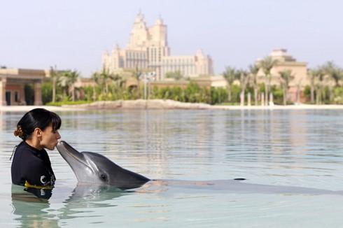 Бухта дельфинов The Dolphin Bay, курортный комплекс Atlantis