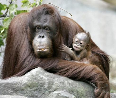 Детёныши животных (27)
