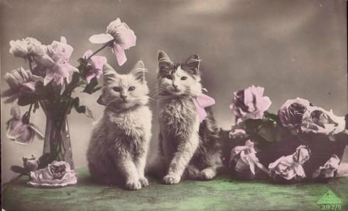 Старинные немецкие открытки с кошками (15)