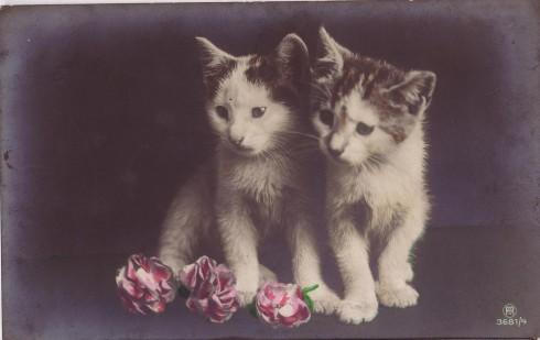 Старинные немецкие открытки с кошками (12)
