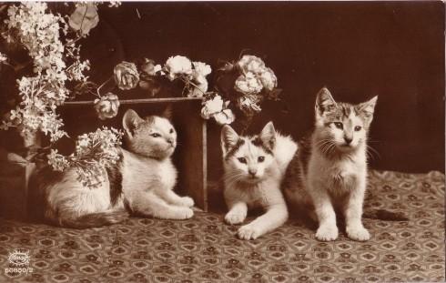 Старинные немецкие открытки с кошками (10)