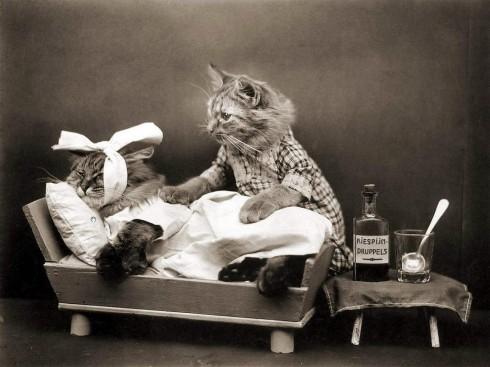 Старинные немецкие открытки с кошками (7)