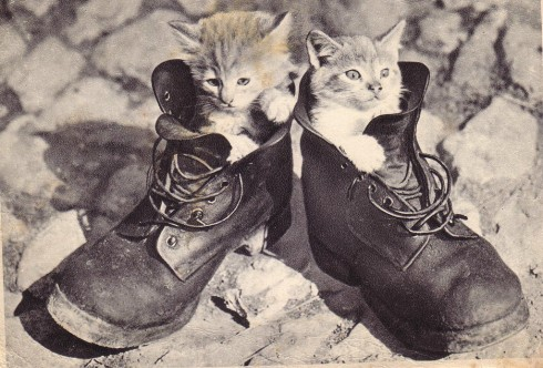 Старинные немецкие открытки с кошками (6)