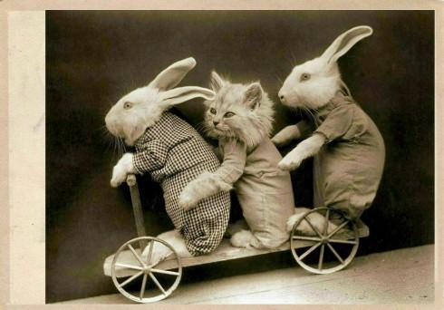 Старинные немецкие открытки с кошками (5)