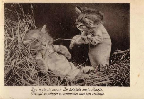 Старинные немецкие открытки с кошками (2)