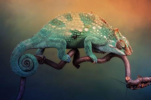 Фотографии хамелеонов (32 штуки) (4)