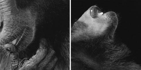 Коллекция фотографий «Больше, чем человек» (31)