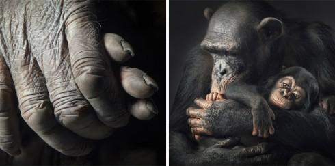 Коллекция фотографий «Больше, чем человек» (33)