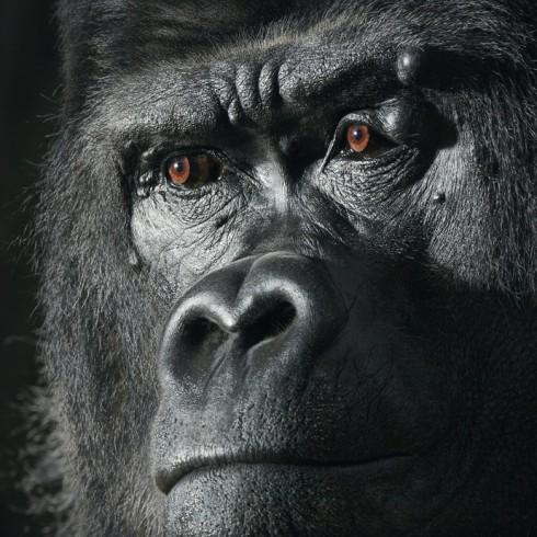 Коллекция фотографий «Больше, чем человек» (36)