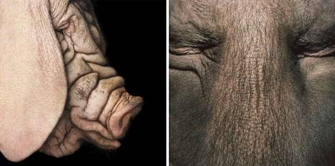 Коллекция фотографий «Больше, чем человек» (51)