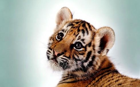Детёныши животных (1)