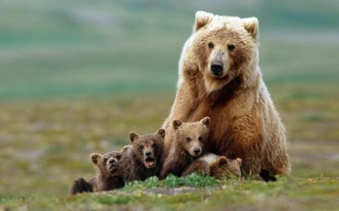 Детёныши животных (5)
