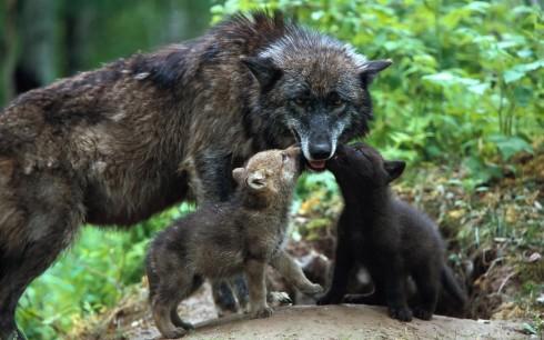 Детёныши животных (6)