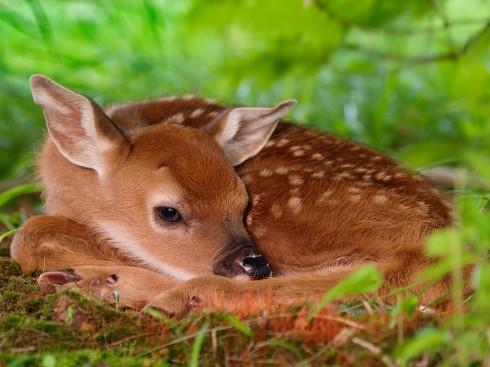 Детёныши животных (61)