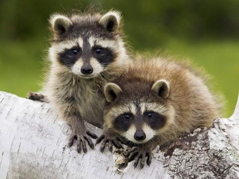Детёныши животных (11)
