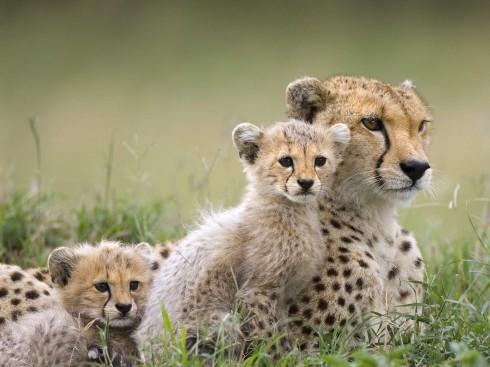Детёныши животных (12)