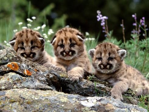 Детёныши животных (60)